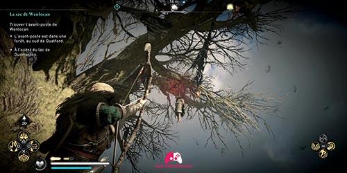 Emplacement du crane sur l'arbre