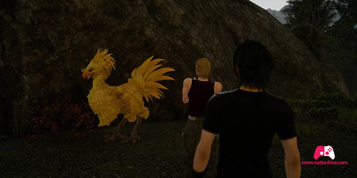 Photo du Chocobo