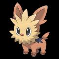 Ponchiot est de la famille de Ponchien